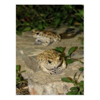 Dos pequeños sapos - impresión de la rana verde tarjetas postales