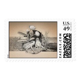 dos pequeños sellos divertidos lindos de las ranas