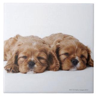 Dos perritos arrogantes del perro de aguas de rey  azulejo cuadrado grande