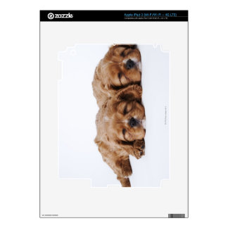 Dos perritos arrogantes del perro de aguas de rey  iPad 3 skin