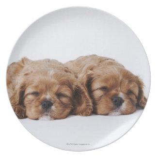 Dos perritos arrogantes del perro de aguas de rey plato para fiesta