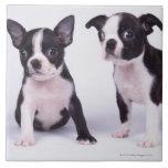 Dos perritos blancos y negros azulejo cuadrado grande
