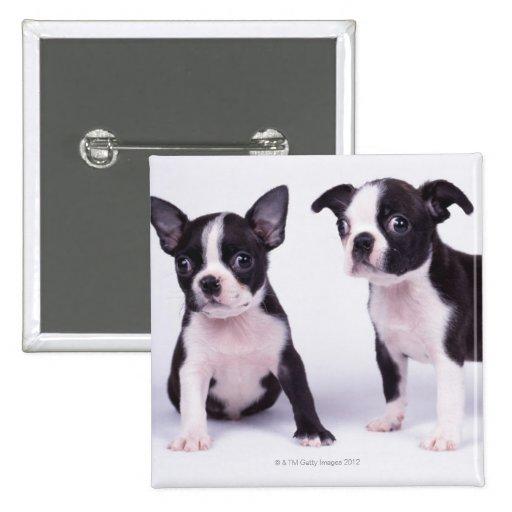 Dos perritos blancos y negros pin