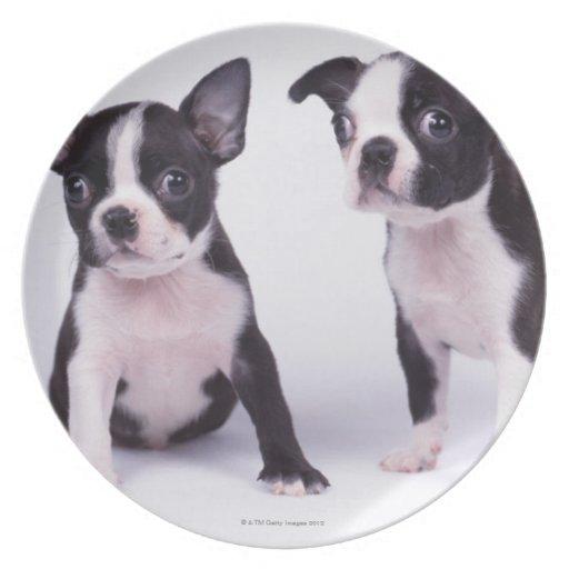 Dos perritos blancos y negros platos para fiestas
