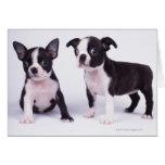 Dos perritos blancos y negros tarjeta