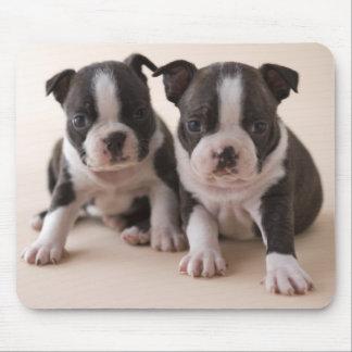 Dos perritos de Boston Terrier Mousepads