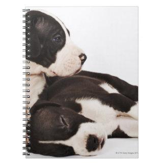 Dos perritos de great dane del Harlequin en blanco Libros De Apuntes
