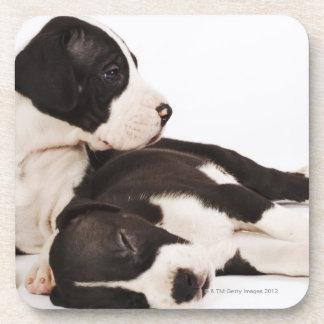 Dos perritos de great dane del Harlequin en blanco Posavasos De Bebidas