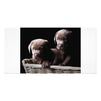 Dos perritos de Labrador del chocolate Tarjetas Fotográficas Personalizadas