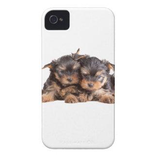Dos perritos de Yorkie iPhone 4 Case-Mate Cobertura