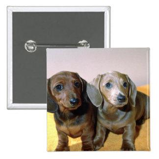 Dos perritos del Dachshund Pins