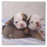 Dos perritos del dogo en la toalla azulejos