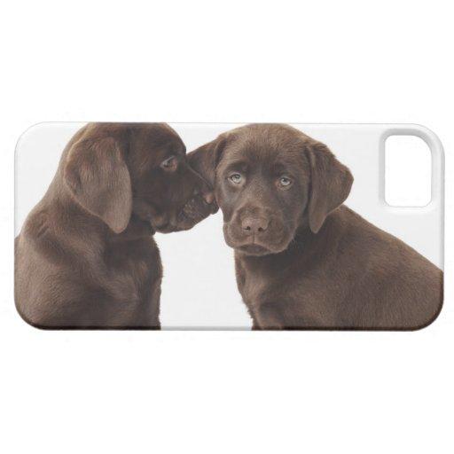 Dos perritos del labrador retriever del chocolate iPhone 5 cárcasa