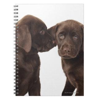 Dos perritos del labrador retriever del chocolate libreta espiral
