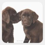 Dos perritos del labrador retriever del chocolate calcomanías cuadradas personalizadas