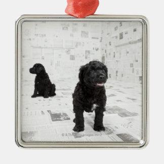 Dos perritos portugueses del perro de agua en un c ornamento de navidad