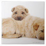 Dos perritos que duermen, tiro de Shar Pei del est Azulejos Ceramicos