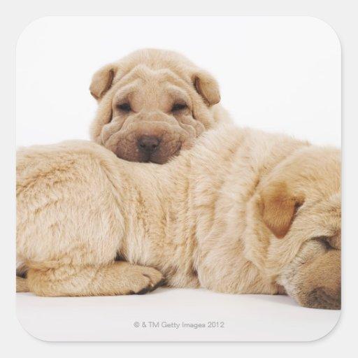 Dos perritos que duermen, tiro de Shar Pei del Pegatina Cuadrada