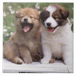 Dos perritos que se sientan junto tejas  ceramicas