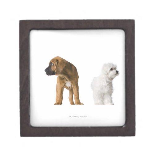 Dos perros cajas de recuerdo de calidad
