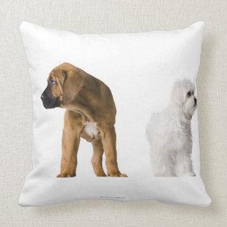 Dos perros almohada