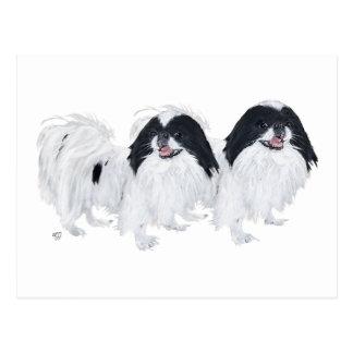 Dos perros de Chin del japonés Tarjeta Postal