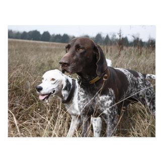 Dos perros en el campo, Houston, Tejas, los Tarjetas Postales