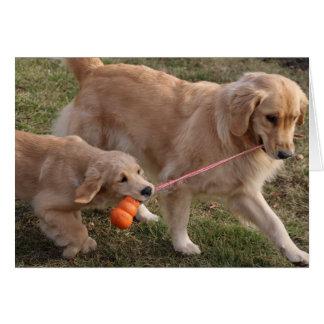 Dos perros esconden la tarjeta de felicitación
