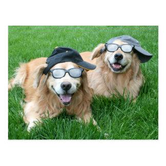 Dos perros perdigueros de oro frescos en gorras y