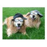 Dos perros perdigueros de oro frescos en gorras y  postales