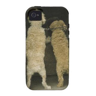 Dos perros que miran en la ventana de la puerta, v iPhone 4/4S carcasa