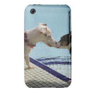 Dos perros que se besan en el poolside carcasa para iPhone 3