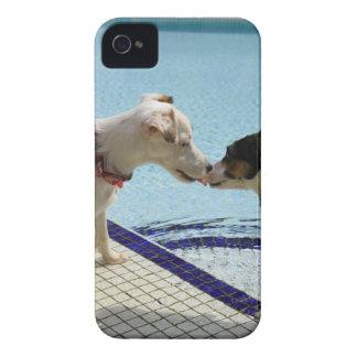 Dos perros que se besan en el poolside carcasa para iPhone 4 de Case-Mate