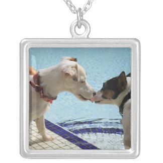 Dos perros que se besan en el poolside colgante cuadrado