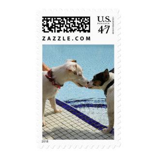 Dos perros que se besan en el poolside estampilla