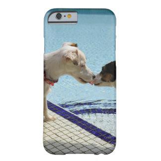 Dos perros que se besan en el poolside funda barely there iPhone 6