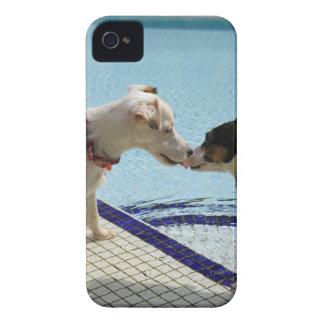 Dos perros que se besan en el poolside funda para iPhone 4 de Case-Mate