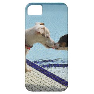 Dos perros que se besan en el poolside funda para iPhone SE/5/5s