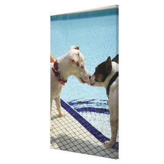 Dos perros que se besan en el poolside impresión en tela