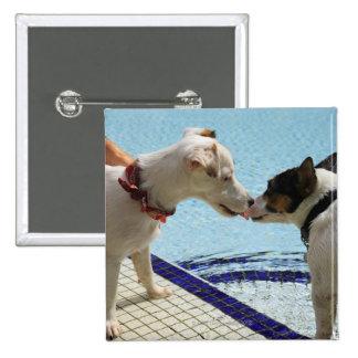 Dos perros que se besan en el poolside pin cuadrado