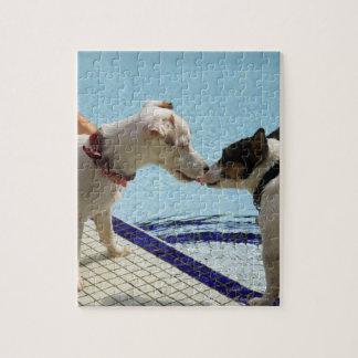 Dos perros que se besan en el poolside puzzle con fotos