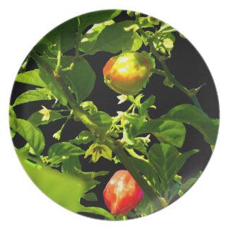 dos pimientos picantes ponen verde el follaje back plato de comida