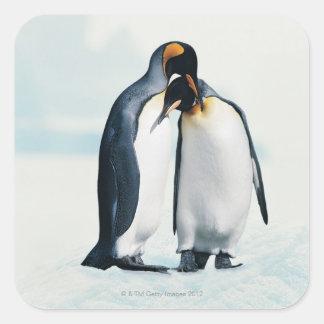 Dos pingüinos cariñosos pegatinas cuadradas