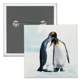 Dos pingüinos cariñosos pin cuadrado