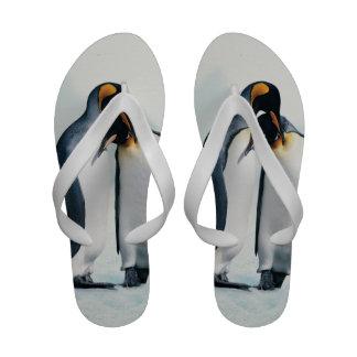 Dos pingüinos cariñosos sandalias de playa