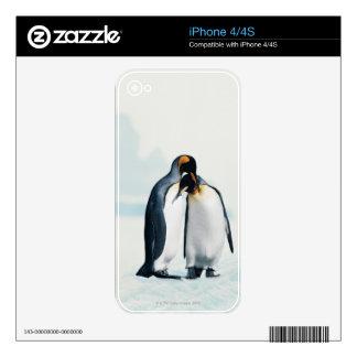 Dos pingüinos cariñosos skins para iPhone 4S