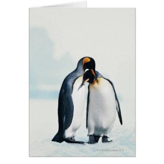 Dos pingüinos cariñosos tarjeton