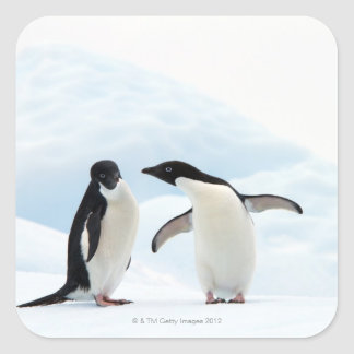 Dos pingüinos de Adelie que se sientan en una hoja Pegatina Cuadradas Personalizada