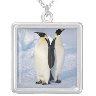 Dos pingüinos de emperador en la Antártida Collares Personalizados