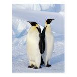 Dos pingüinos de emperador en la Antártida Postal